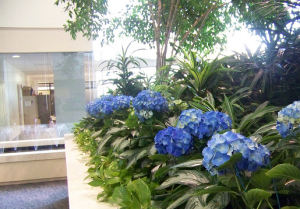 Interior Plant Services Specialist Northern KY